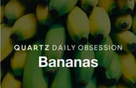 Quartz Obsession